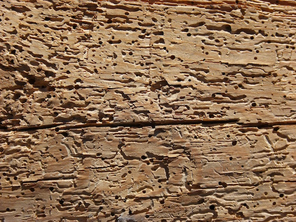 What is woodworm? - What To Do If You Find Woodworm - OurProperty.co.uk
